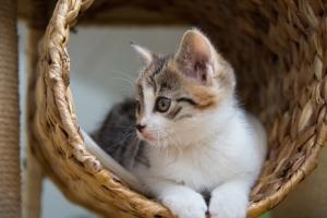 Kratzbaum kaufen, Katze im Kratzbaum