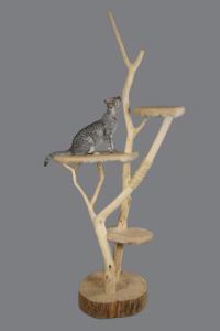 Ratgeber für Kratzbäume, Naturkratzbaum