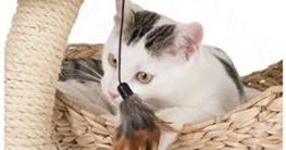 Katze an den Kratzbaum gewöhnen