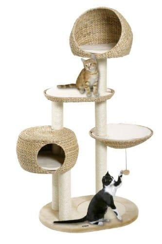 Katze an Kratzbaum gewöhnen durch Spielen