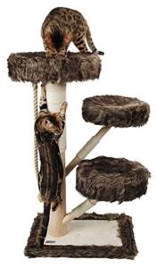 Katze an Kratzbaum gewöhnen durch Leckerlies