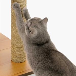 Katze an Kratzbaum gewöhnen durch kratzen