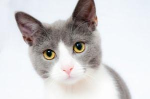 Katze das Kratzen an Möbeln abgewöhnen, gezielte Maßnahmen gegen das Möbelkratzen