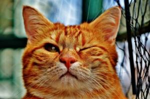 Katze das Kratzen an Möbeln abgewöhnen, Mit den richtigen Tricks klappts mit der Katze