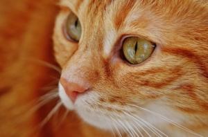 Katze das Möbelkratzen abgewöhnen, Katzen - Erziehung ist notwendig