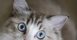 Katze das Kratzen an Möbeln abgewöhnen