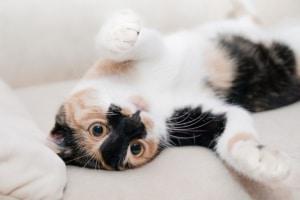 Katze das Kratzen an Möbeln abgewöhnen, Lob