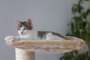 Katze das Kratzen an Möbeln abgewöhnen, Der richtige Kratzbaum ist wichtig