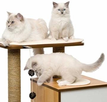 Design Katzenmöbel