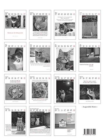 Der literarische Katzenkalender 2018, Kalender Katzen 2
