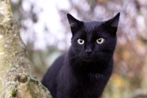 Schwarze Katze und der Aberglaube, Katzen Fellfarben