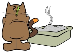 Das richtige Katzenstreu finden