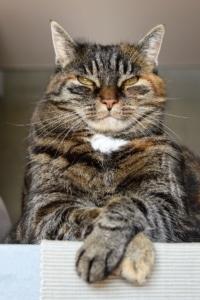 Entspannte Katzen gehen einfacher in die Transportbox