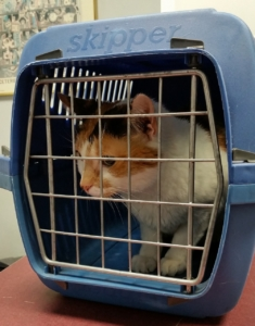 Katze in die Transportbox bekommen