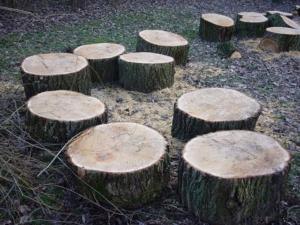 Kratzbaum selber bauen - Baumscheibe
