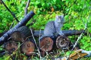 Kratzbaum selber bauen - Baumstamm