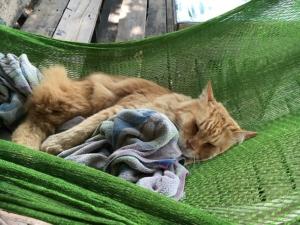 Kratzbaum selber bauen - Hängematte für die Katze