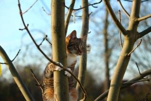 Kratzbaum selber bauen - Katze klettert auf Baum (2)