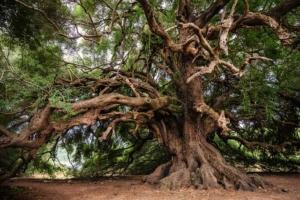 Kratzbaum selber bauen - der perfekte Kletterbaum