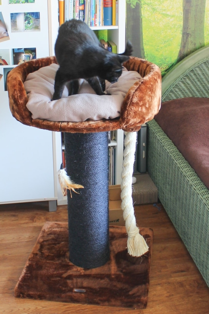 XXL Kratzbaum Test Chartreux RHRQuality Katze frisst Leckerchen im Katzenbett