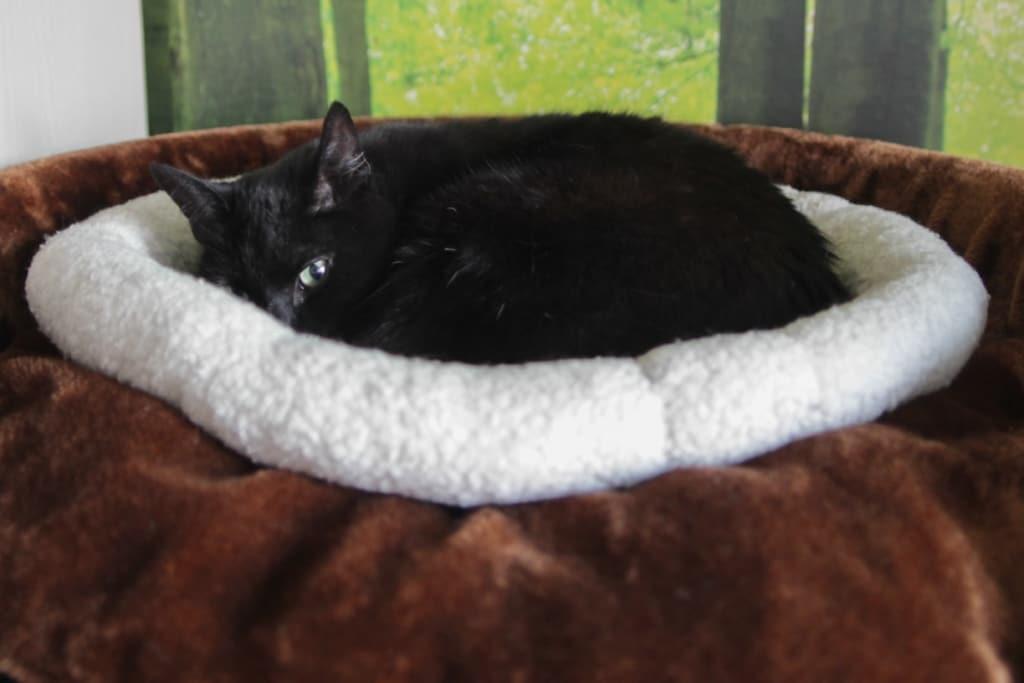XXL Kratzbaum Test Chartreux RHRQuality Katze schläft in ihrem neuen Kratzbaum