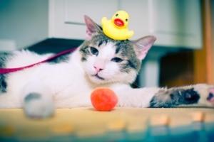 Katzenspielzeug selber machen - Käufliches Spielzeug oft ungeeignet