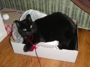 Katzenspielzeug selber bauen - einfache, schnelle Bauanleitungen