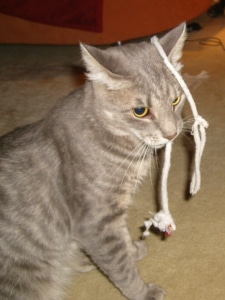 Katzenspielzeug selber machen - Schnürsenkel als Katzenangel